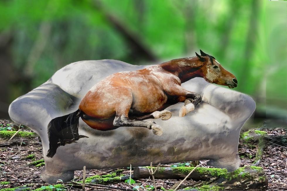 Kuwi schläft im Wald