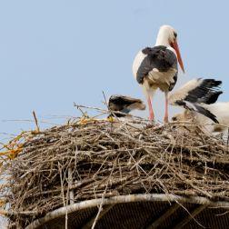 Nest aufräumen