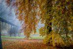 Herbstlaub wie Gold
