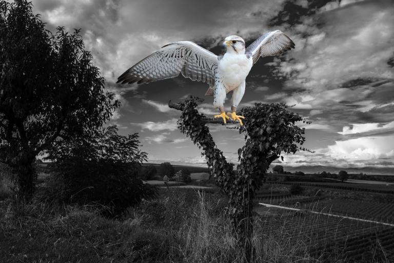 Falke auf Jule